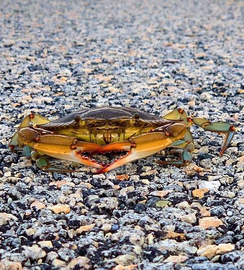 Crabby Love