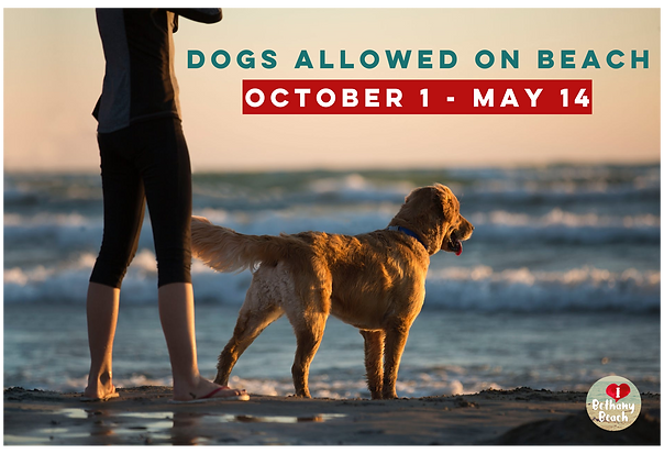 Dogs Allowed on Beach.png
