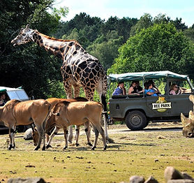Ree park Ebeltoft Zoo