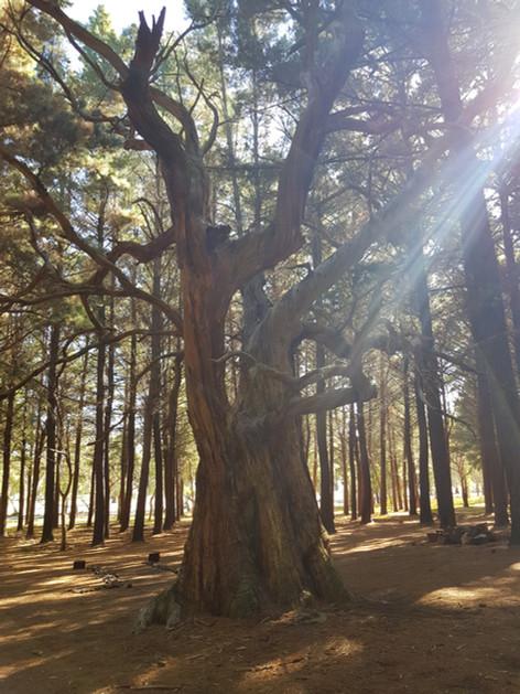 Burbrook Forest