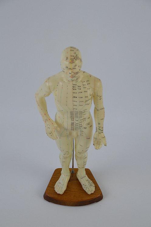Anatomische model voor acupunctuur, jaren '60