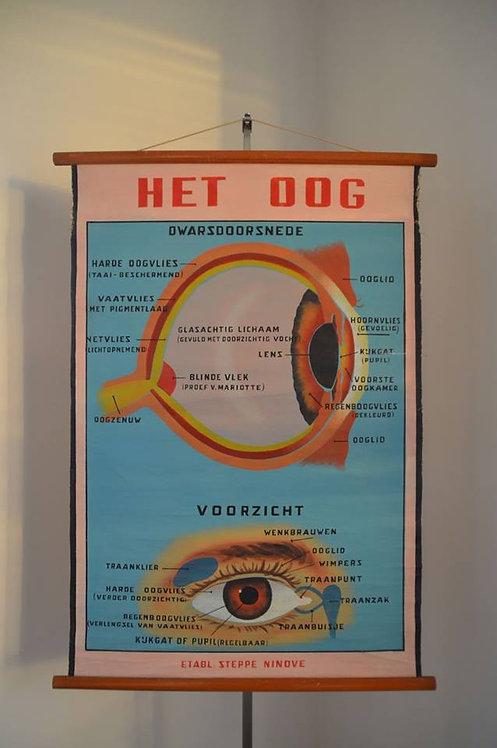Antieke schoolkaart met als thema Het Oog