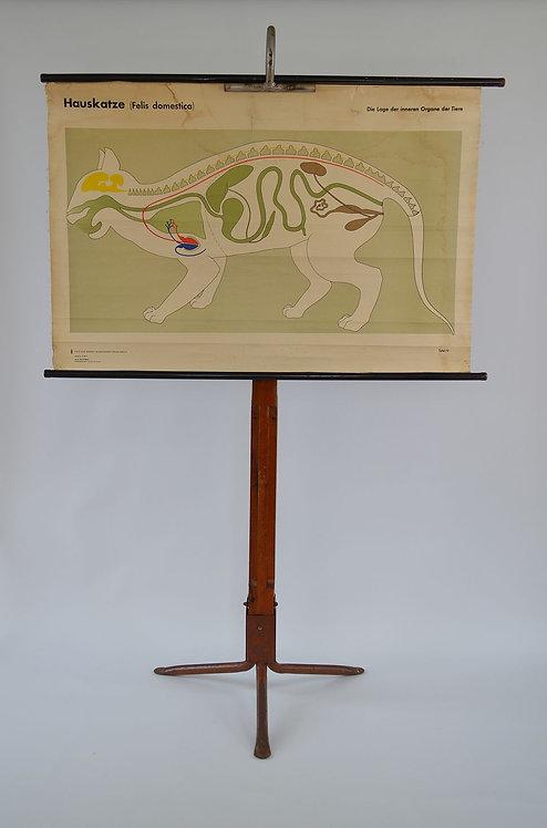 Didactische schoolkaart over organen kat, voormalige DDR, jaren '70