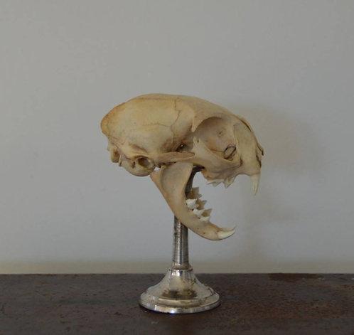 Taxidermie, kop van kat op metalen staander