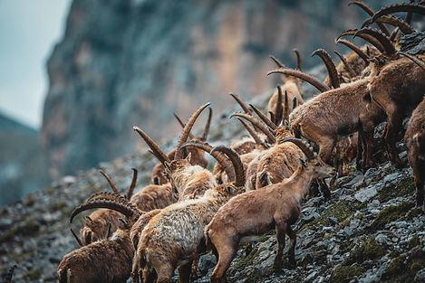 Wildtierfotografie Veit Fritz Graubünden