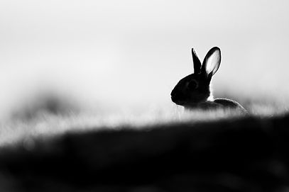 20200520- Rabbit -1-2.jpg