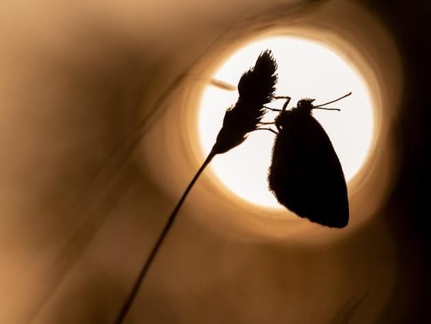 Getting closer to Butterflies