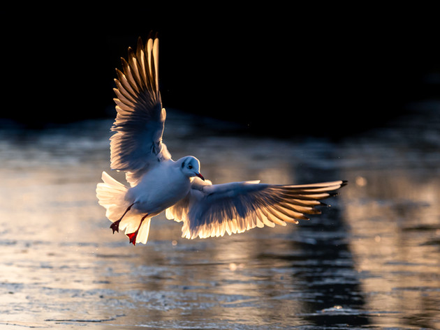 Getting closer to Gulls