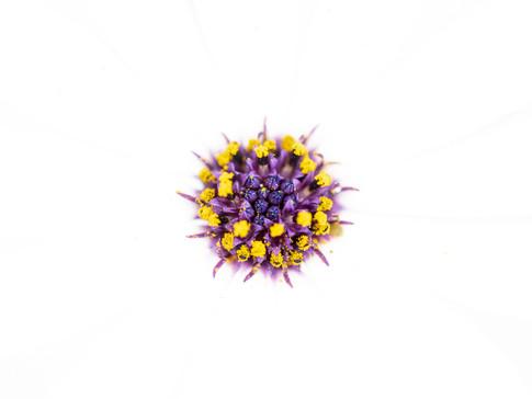 The Microbe