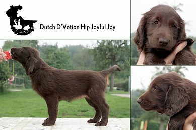Dutch D'Votion Hip Joyful Joy.jpg