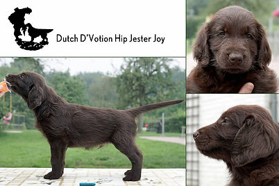 Dutch D'Votion Hip Jester Joy.jpg