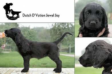 Dutch D'Votion Jewel Joy.jpg