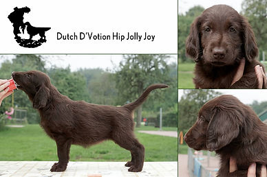 Dutch D'Votion Hip Jolly Joy.jpg