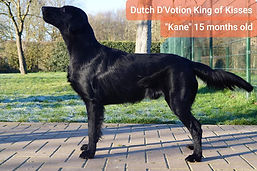 Dutch D'Votion King of Kisses 15 months