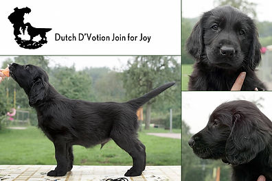 Dutch D'Votion Join for Joy.jpg