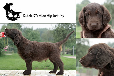 Dutch D'Votion Hip Just Joy.jpg