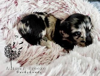 puppy14.jpg