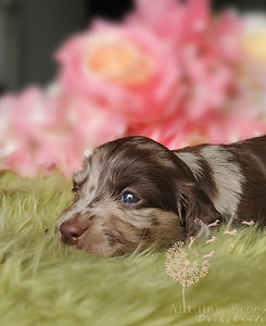 puppy10.jpg