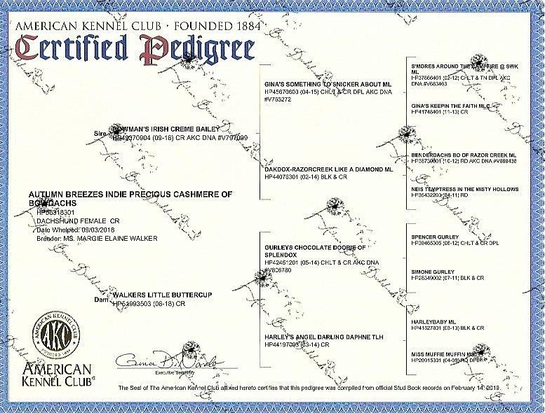 indies pedigree