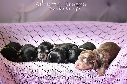 puppies16.jpg