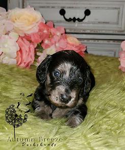 puppy11.jpg