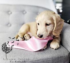 puppy3.jpg