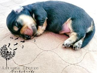 puppy18.jpg