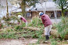 樹木の伐採