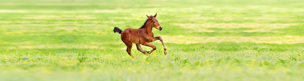 Colt running.jpg