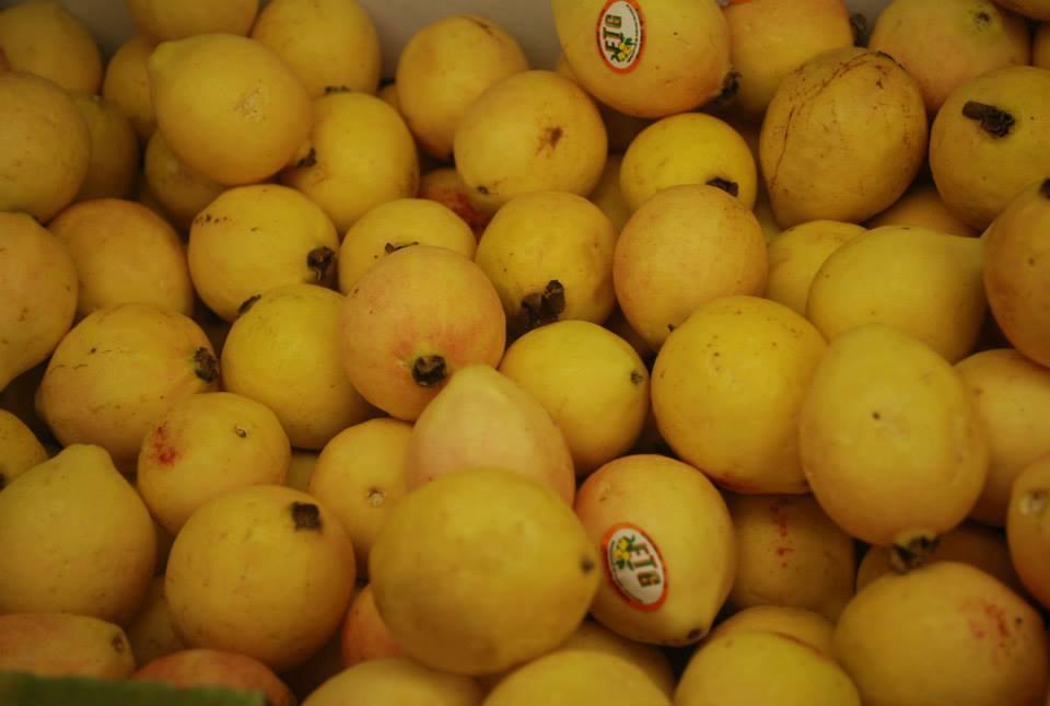Guava / Guayaba