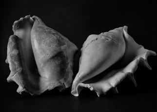 2 shells-1.jpg