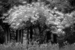Forest-40.jpg