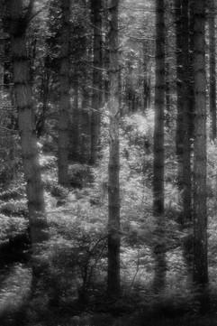 Forest-30.jpg
