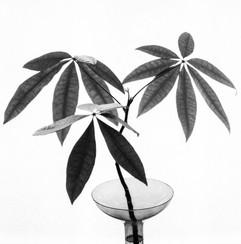 botanica-9.jpg