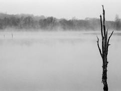 Niebla-8.jpg