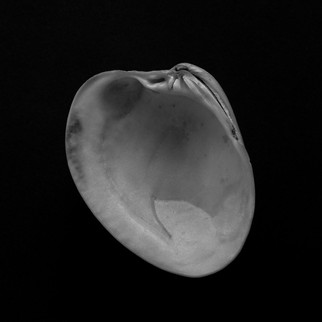 mf shells-1.jpg