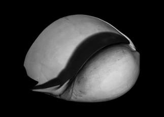 Shell-1.jpg