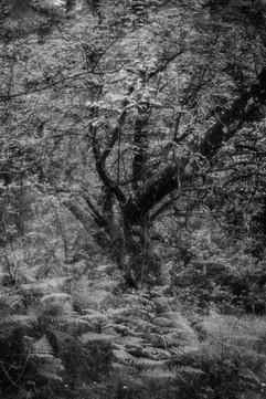 Forest-36.jpg
