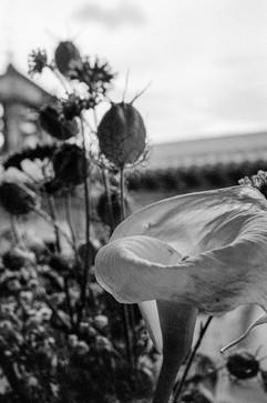 botanica-7.jpg