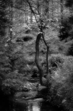 Forest-39.jpg
