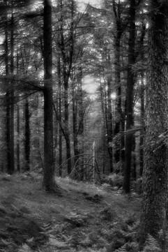 Forest-35.jpg