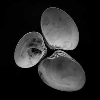 mf shells-3.jpg