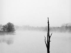 Niebla-2.jpg