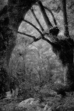 Forest-31.jpg