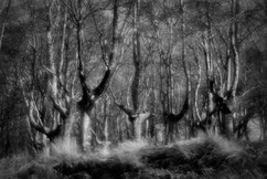 Forest-41.jpg