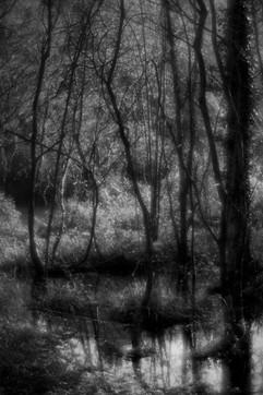 Forest-16.jpg