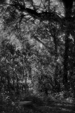 Forest-22.jpg