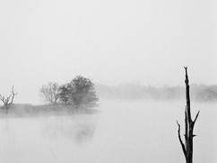 Niebla-3.jpg