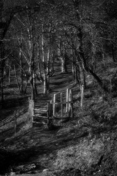 Forest-14.jpg