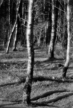 Forest-21.jpg